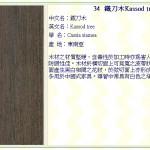 鐵刀木 Kassod tree