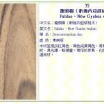 龍頭樹(新幾內亞胡桃木) Paldao、New Gyubea walnut