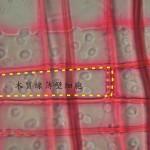 木質線薄壁細胞 Parenchyma of ray