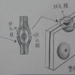 重紋孔對(具紋孔閥) bordered pit pair with torus