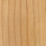 放射松 Radiata pine