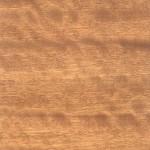 緞木 Satin wood