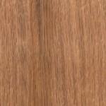 歐洲橡木 European oak