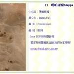 瑪帕樹瘤 Mappa burl