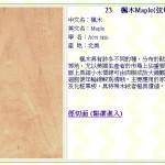 楓木(弦切面) Maple