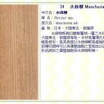 水曲柳 Manchurian ash